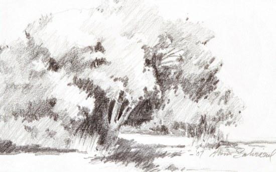 Trees, 300 East