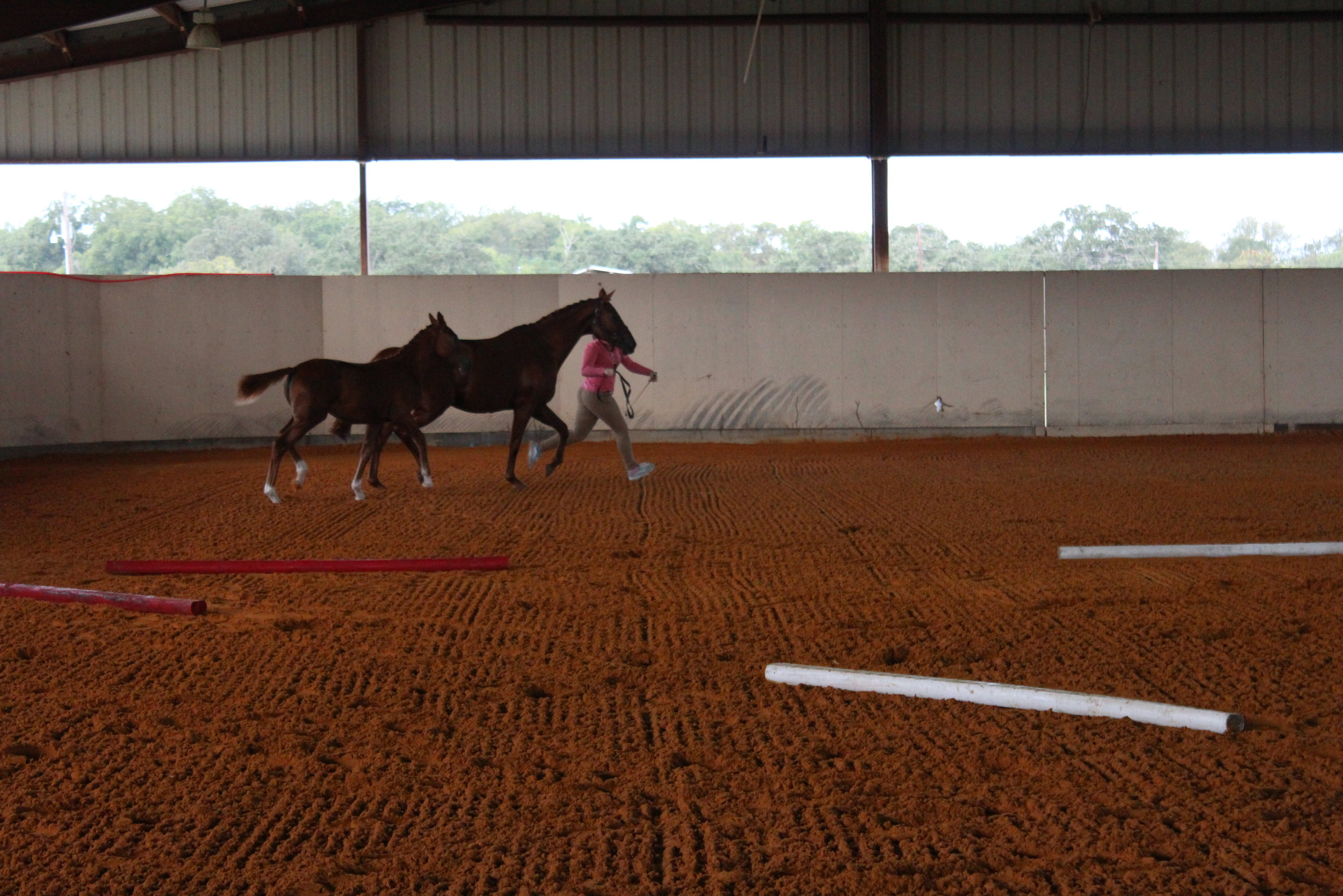 Thanks for showing off your best gaits at inspections, P. All the eye rolls.