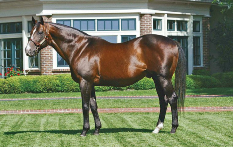 A.P. Indy - Great-grandsire - Retired to stud 1993