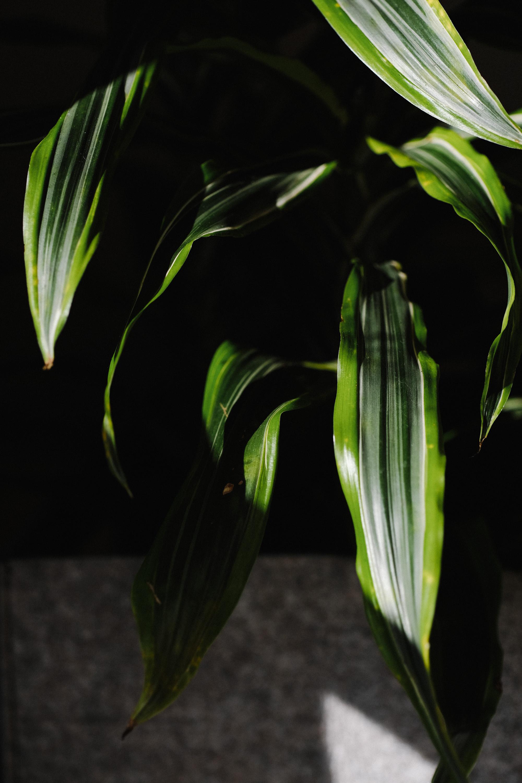 BoxJelly-Details-Hawaii-Plant.jpg