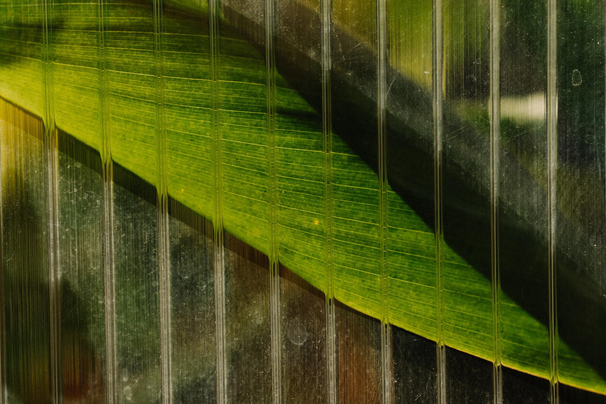 BoxJelly-Interior-Details-palm-leaf