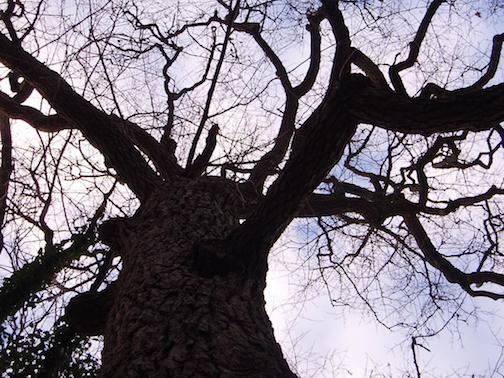 Ivy Tree 2-3.jpg