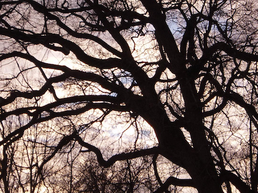Branches and Sky.jpg