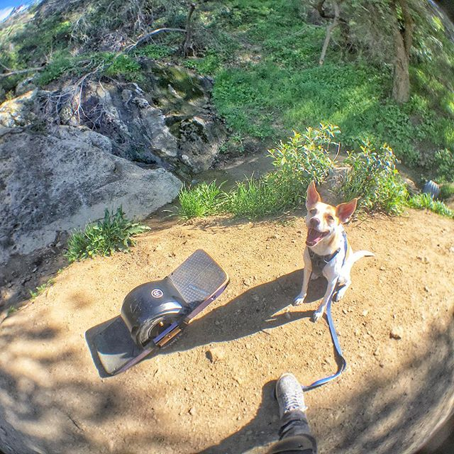 Happy dog! 🐶 Ginger ♥️ @onewheel @ginger_and_lani #bronsoncanyon #trail #hiking #california #thehills #outdoors #thegreatoutdoors #sunny #springsummer2019 #happydog #dogsofinstagram #onewheel #onewheelnation #onewheelxr