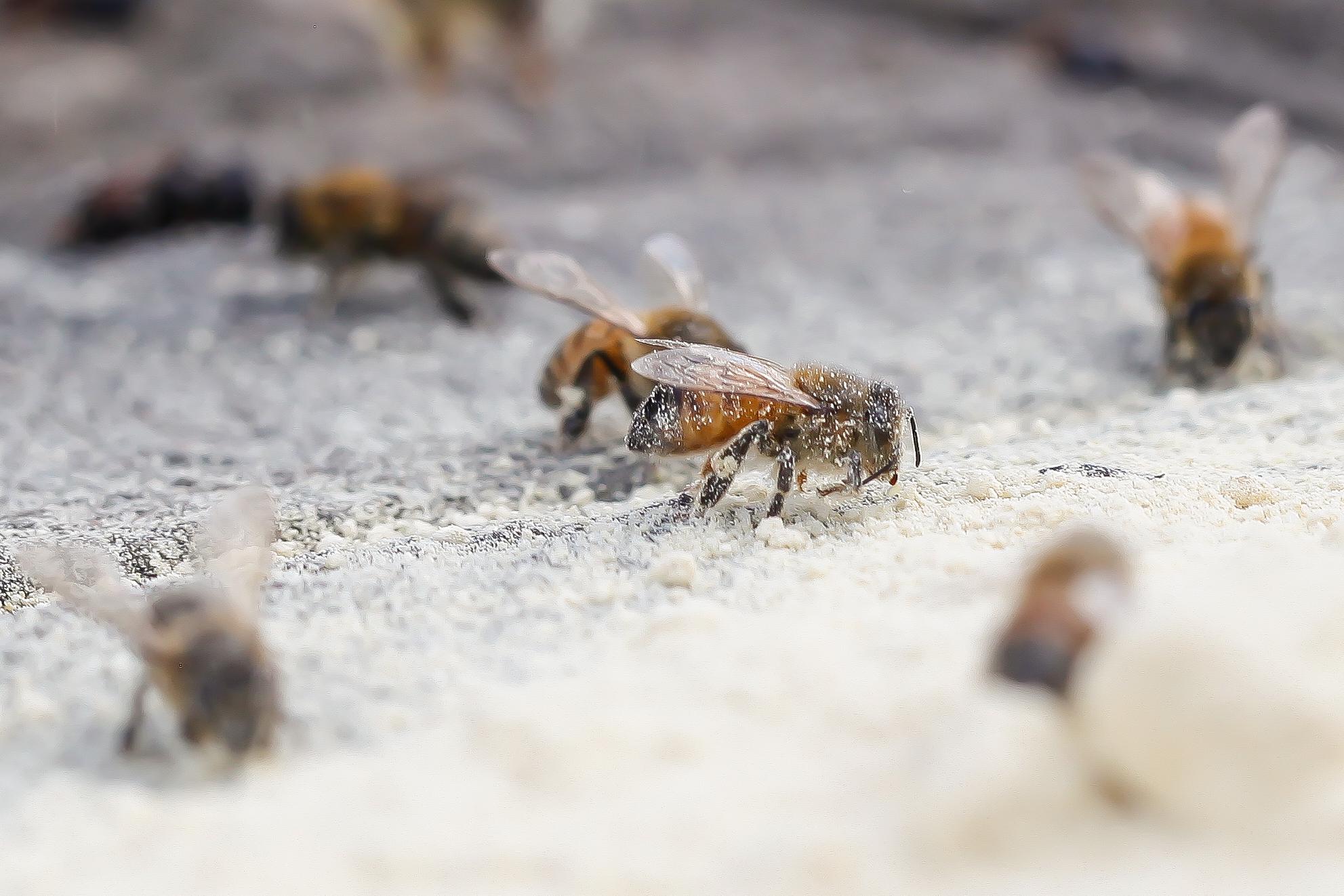 happy bees in ap23.jpg