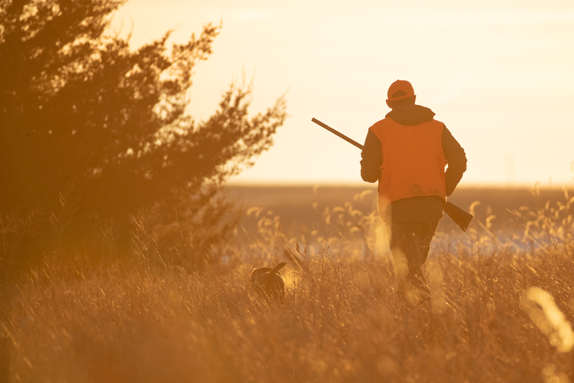 sunrise_rifle_hunting_bird_dog.jpg