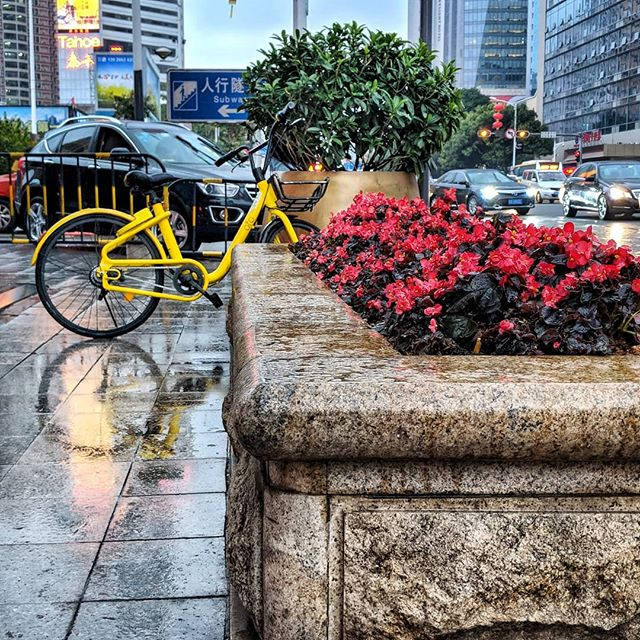 Cycle, City, Camera  #chinadiaries #picoftheday #instagood #rains #red #yellow #citylife #teampixel #chinaig #cycle #shenzhen #ofo #citystreets