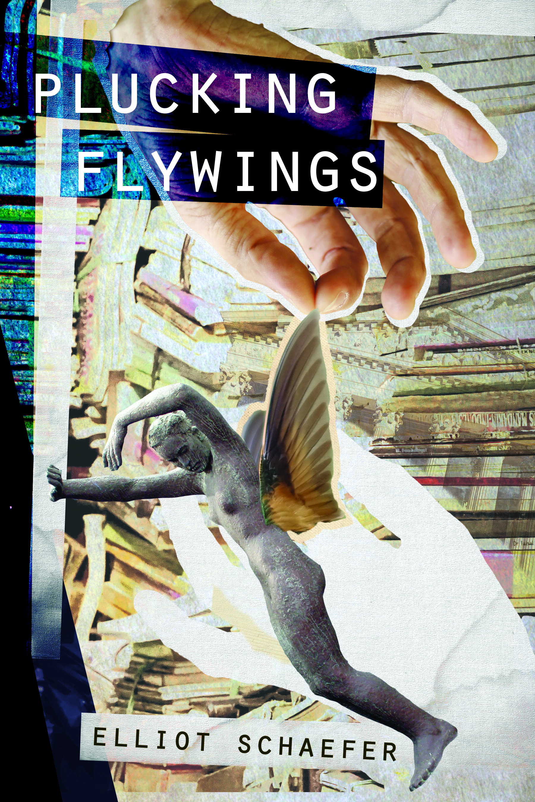 PluckingFlywings.jpg