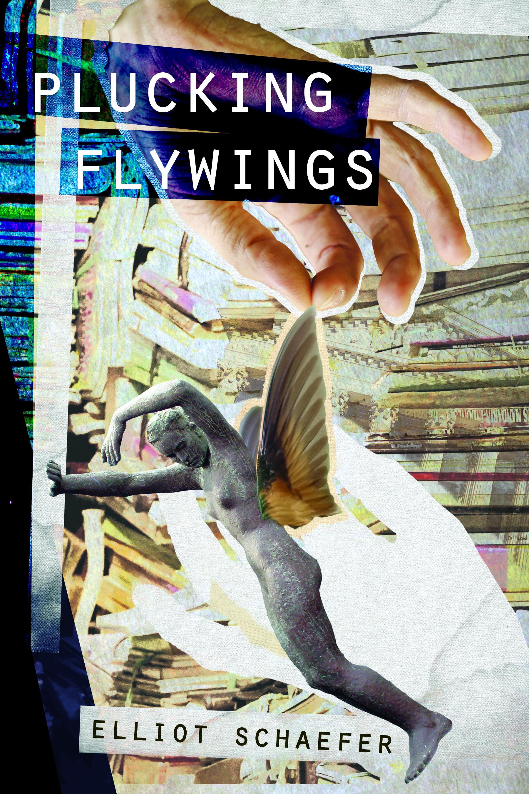 PluckingFlywings.jpg
