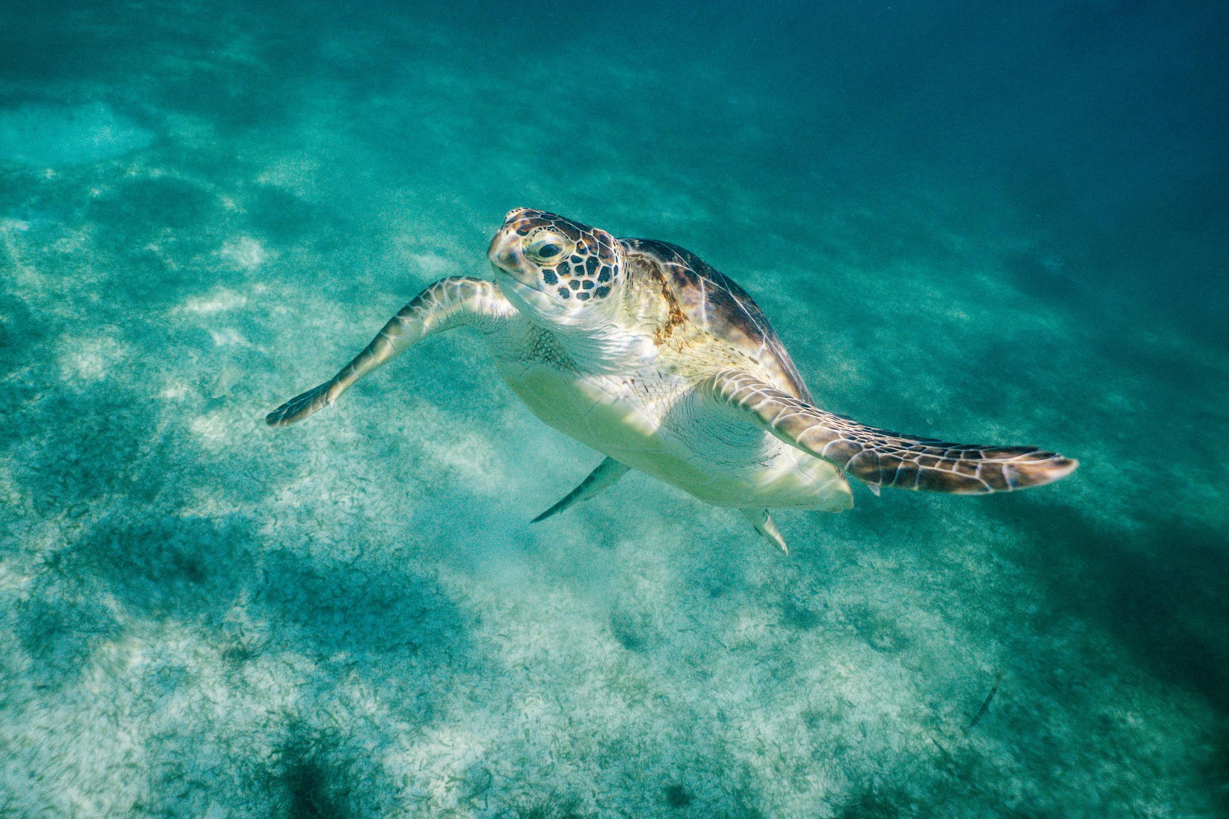 Si amas la fauna marina… - Cancún y sus alrededores son un paraíso