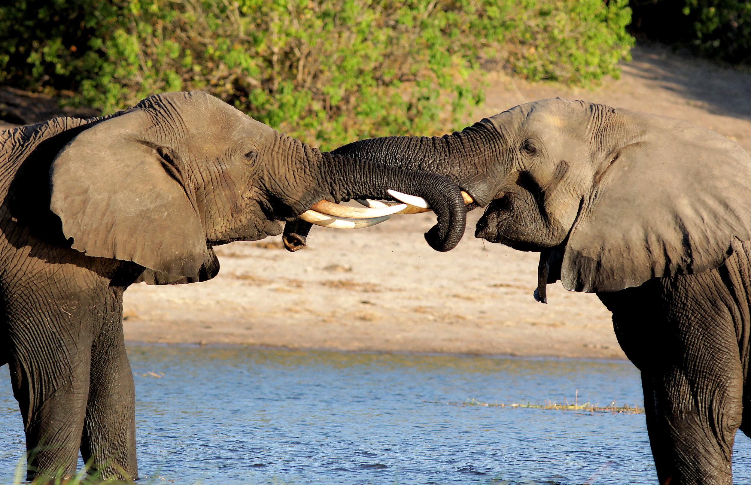 Gaborone, Botswana - Si has soñado con hacer un safari en tu vida y tienes un presupuesto limitado, la capital de Botswana puede ser tu respuesta. Una ciudad pequeña, limpia y accesible que te permitirá conectarte con algunas de las reservas naturales más impresionantes de África sin tener que gastar una fortuna. Desde Gaborone podrás conectar a Chobe National Park o incluso la hermosa delta del Okavango. La infraestructura de Bostwana es muy buena cuando se compara con otros países de la África subsaharina. Aquí podrás conseguir buenos hospedajes desde $80 a $150 dolares por noche.