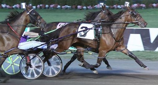 Shake It Cerry in action at The Meadowlands