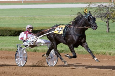 Nuncio wins at the Red Mile for John Campbell