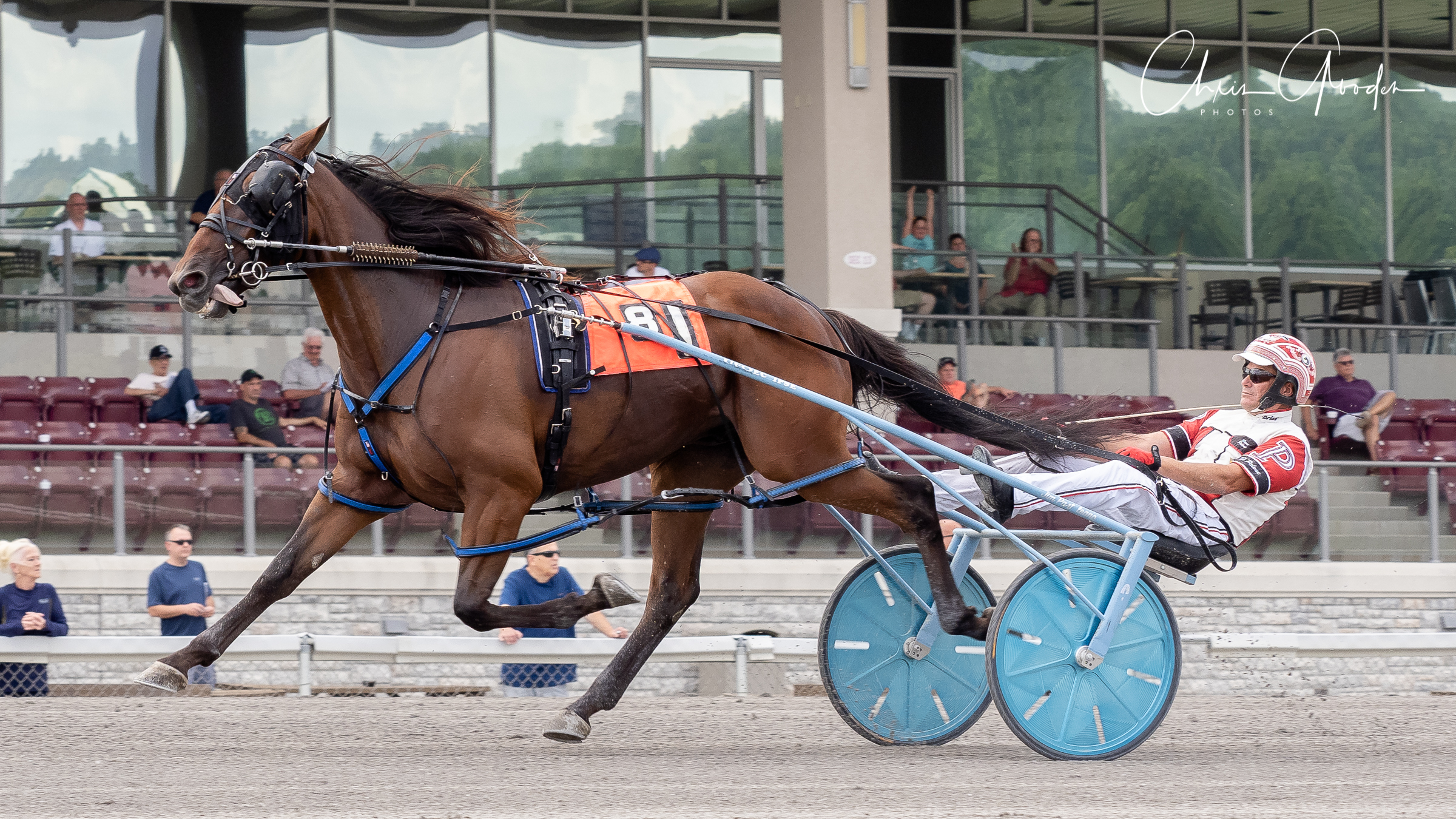 Prince Of Tides and Dave Palone drew off to win his Delvin Miller Adios elimination easily. Chris Gooden Photo.