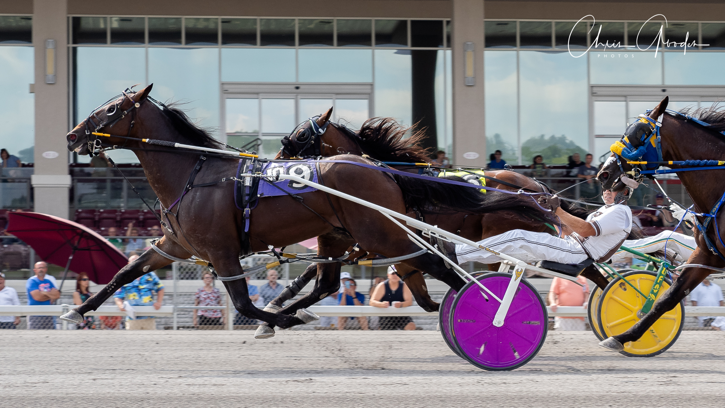 Southwind Ozzi led the Delvin Miller Adios eliminations with a 1:49.3 score. Chris Gooden Photo.