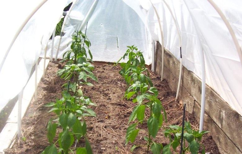 peppers5.jpg