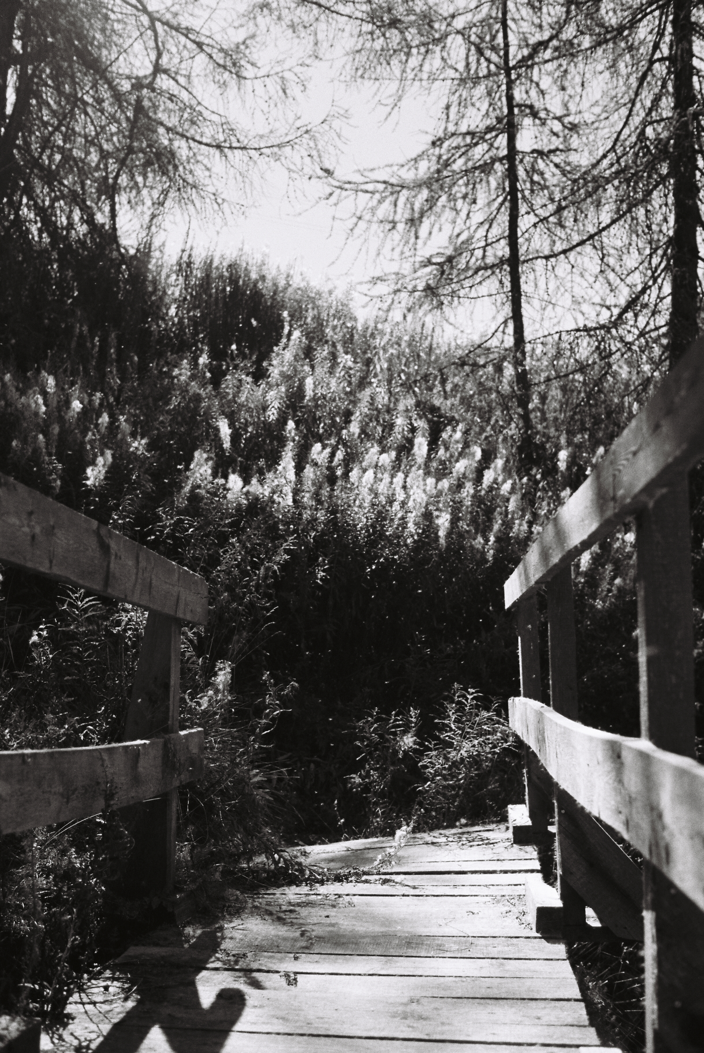 Lindsey_Lindsey-R2-E066 copy.jpg