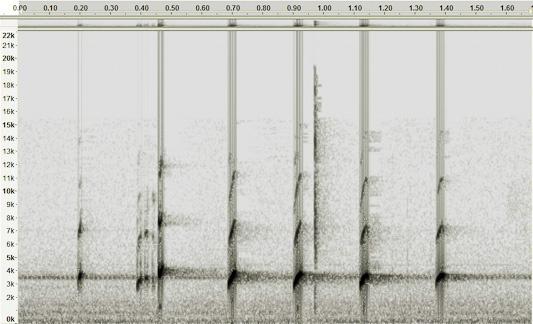 Frog call spectrogram