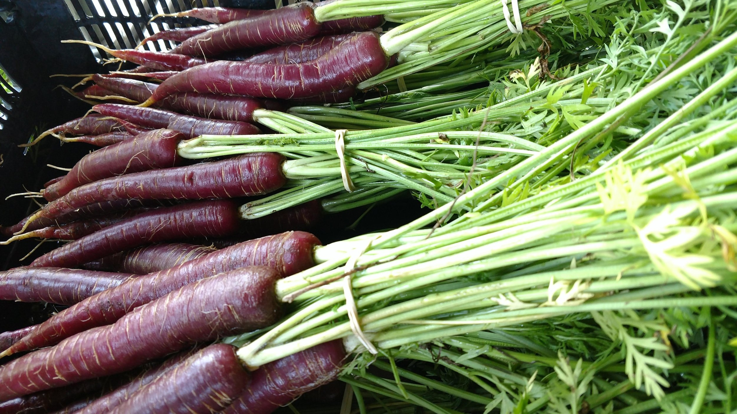 Dragon Carrots, Hoot Blossom Farm