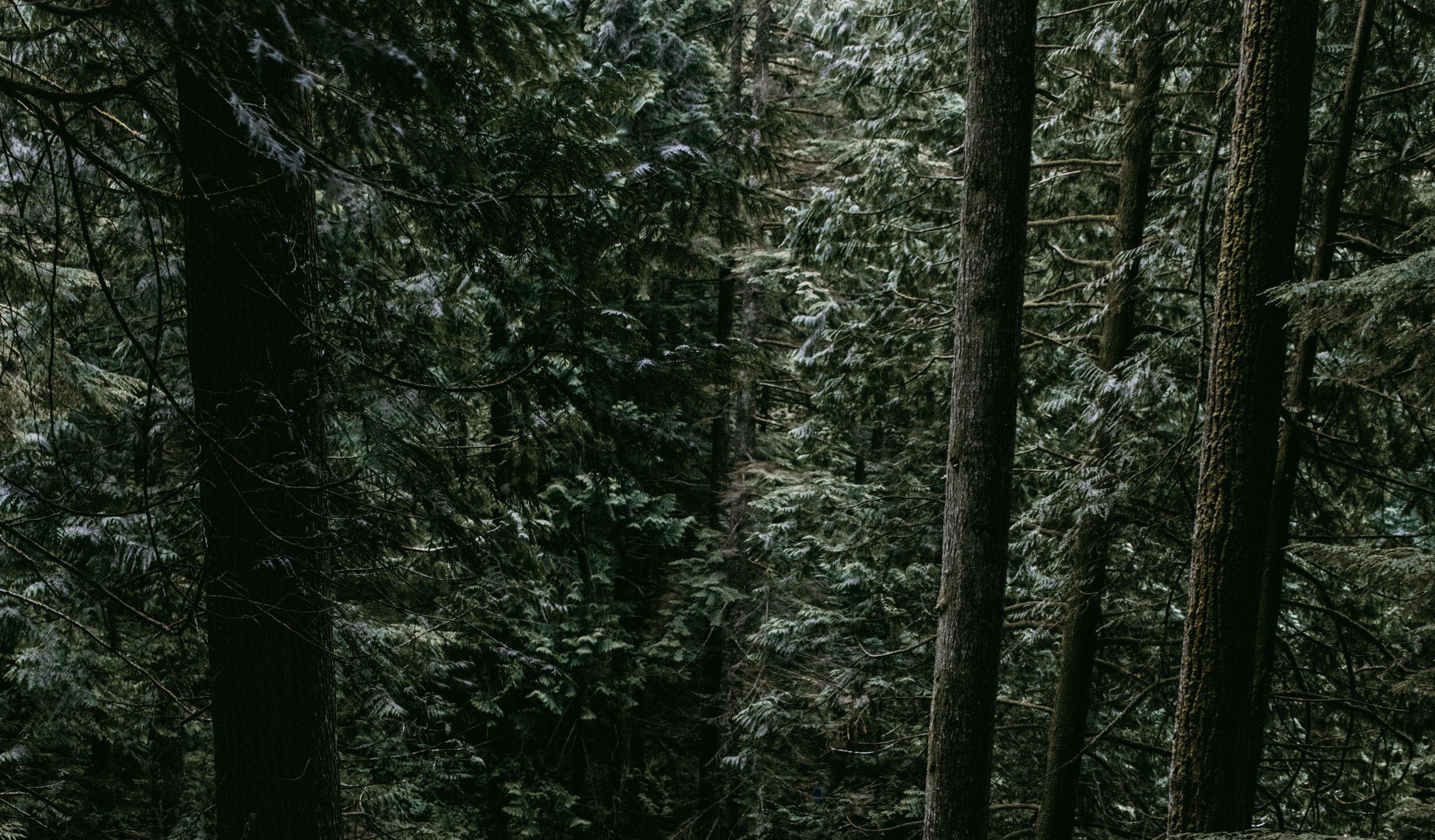 ForestPath Narrow.jpeg