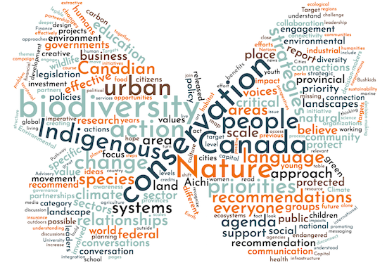 Limenitus_WordCloud4 Small.png