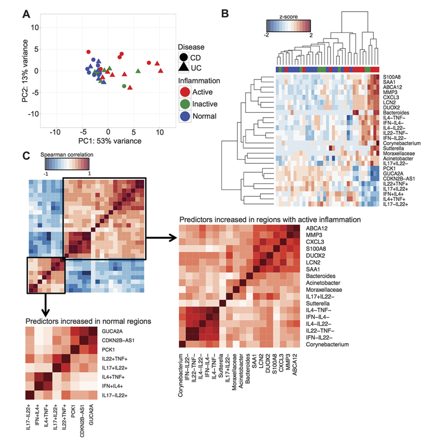 Integrated Analysis of Biopsies from Inflammatory Bowel Disease Patients Identifies SAA1 as a Link Between Mucosal Microbes with TH17 and TH22 Cells