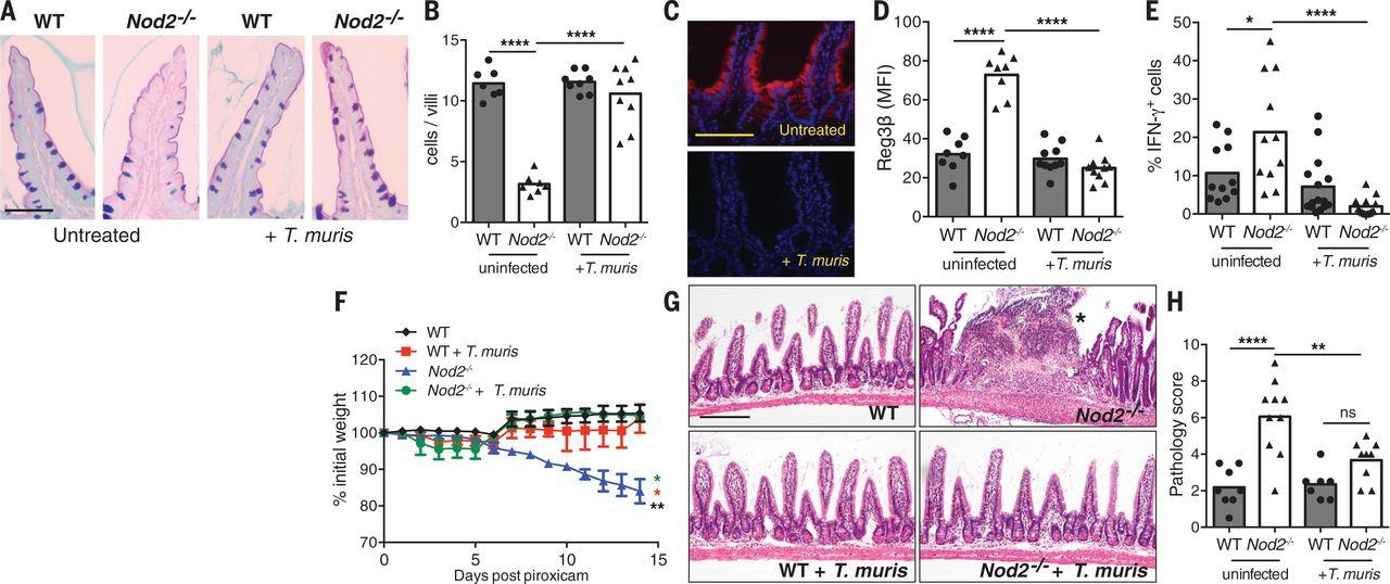 Helminth infection promotes colonization resistance via type 2 immunity