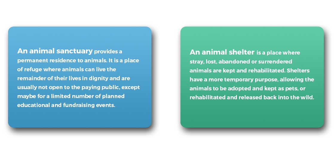 Difference+between+Animal+Shelters+and+Sanctuaries.jpg