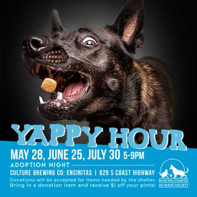 yappy_hour_12x12 (1) (1).jpg