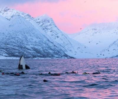 Photo courtesy of Expedition partner Waterproof Cruises & Expeditions. Copyright Jens Wikstrom - Wildlife Photogrpahy