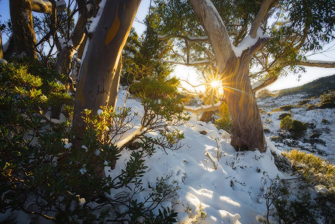 9. Snow Gums, Cradle Mountain-Lake St Clair National Park