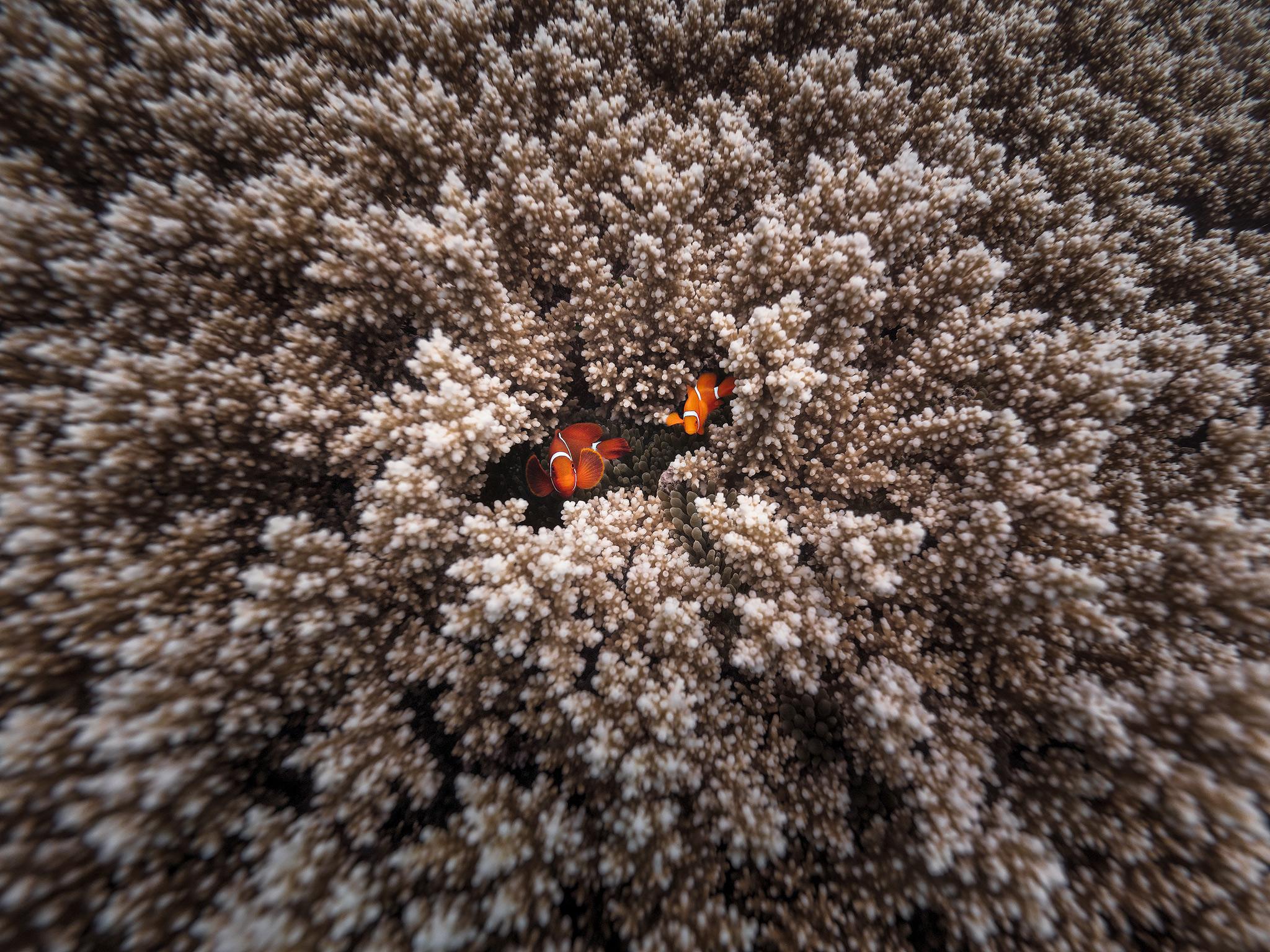 itsworthashot_MattDonovan-ClownFish.jpg