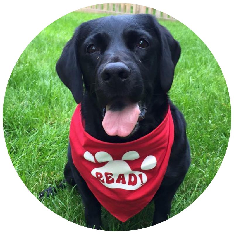 Therapy Dog Prep Class - Prerequisite: AKC CGC Prep