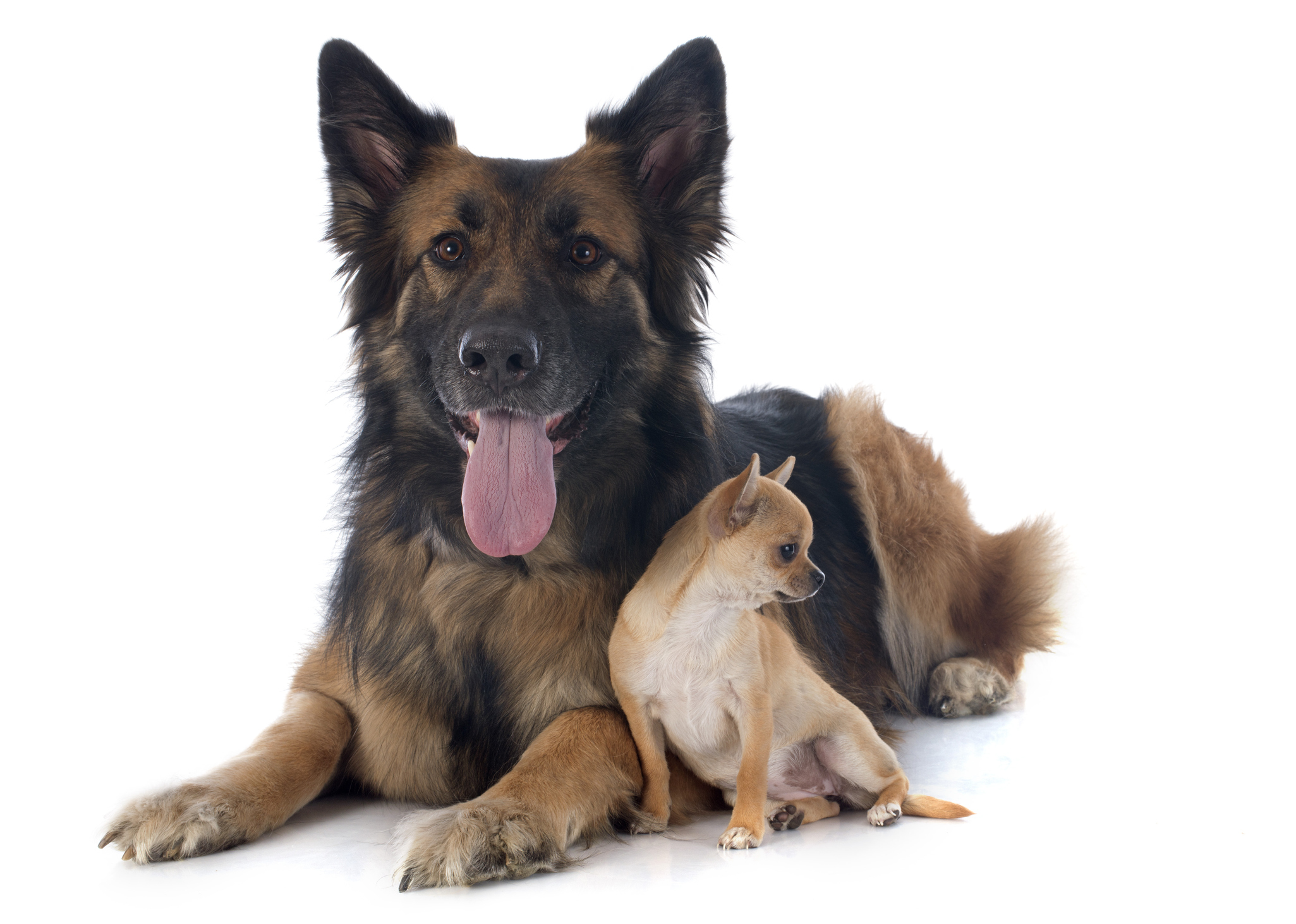 best-rescue-dog-training-class-downers-grove-il