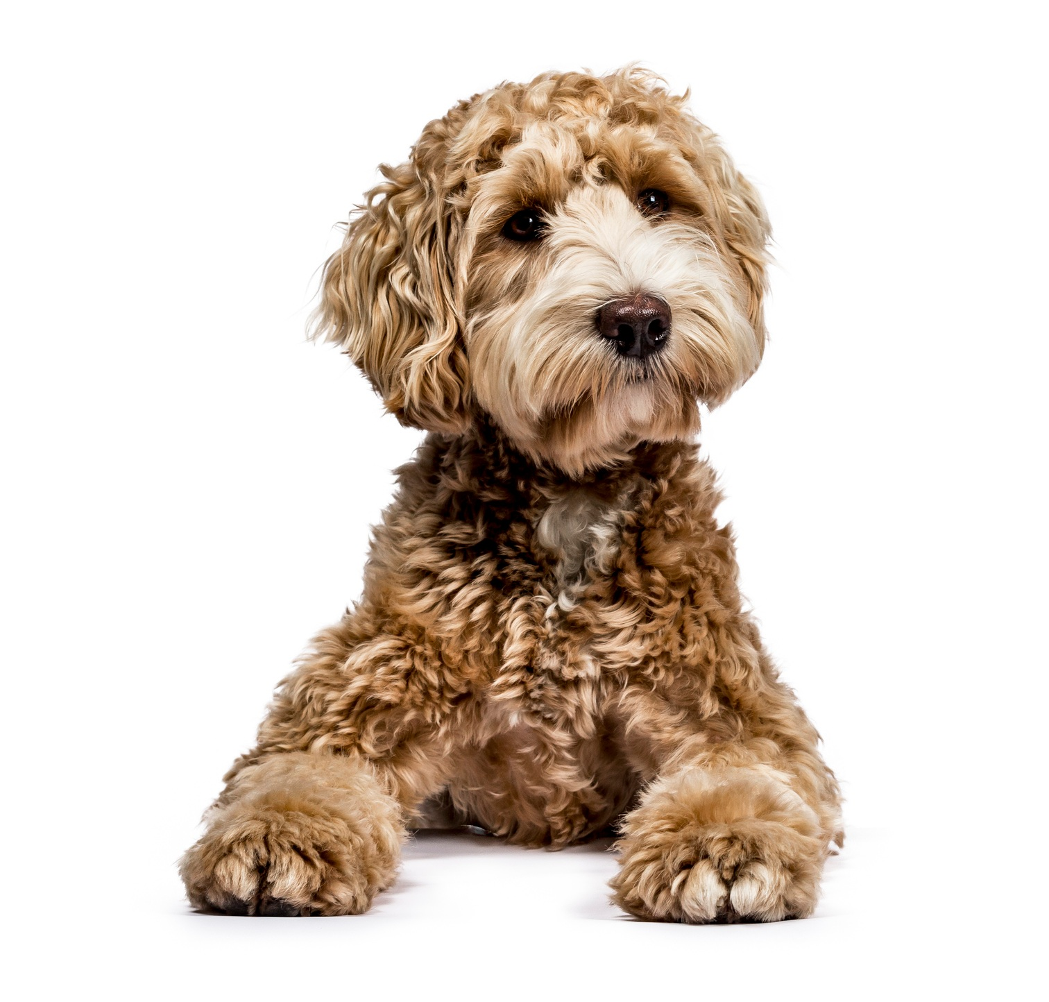 private-dog-training-downers-grove