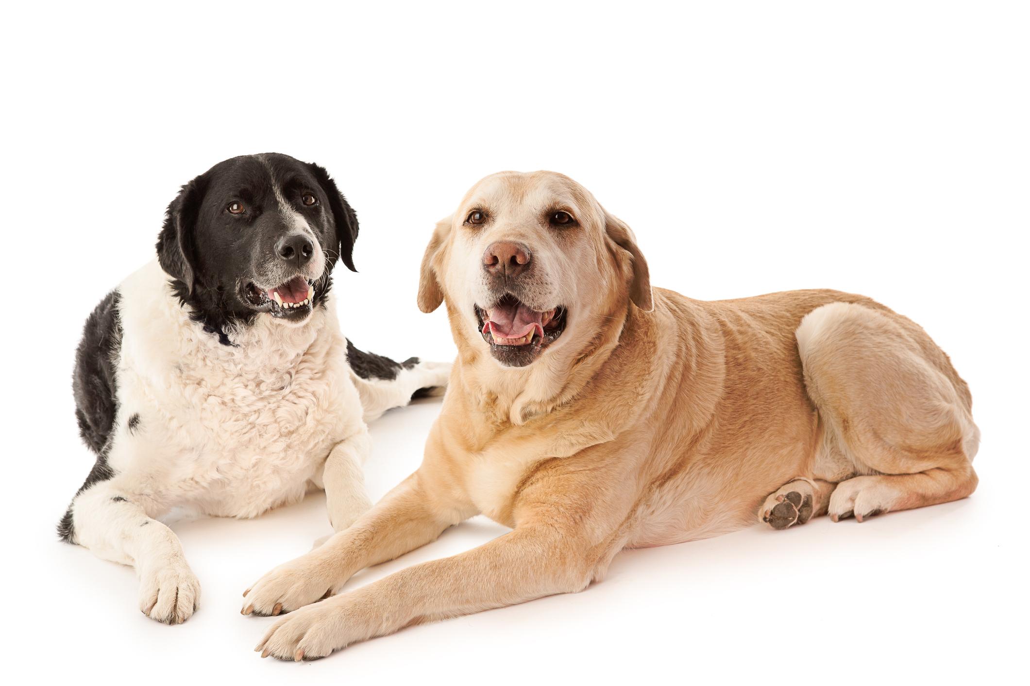 Reactive Dog Class 2 - Prerequisite: Reactive Dog Class 1