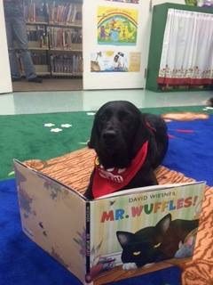 Therapy Dog.JPG