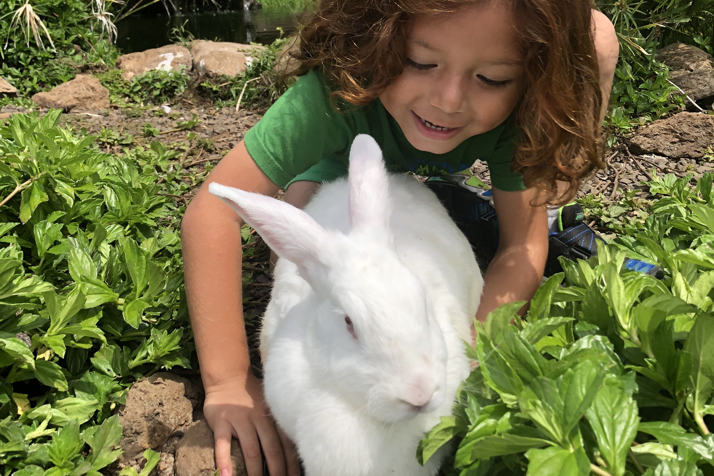 Bunnies everywhere! - Our bunnies roam freely with safe areas and rabbit holes for them to hide in all around the farm.