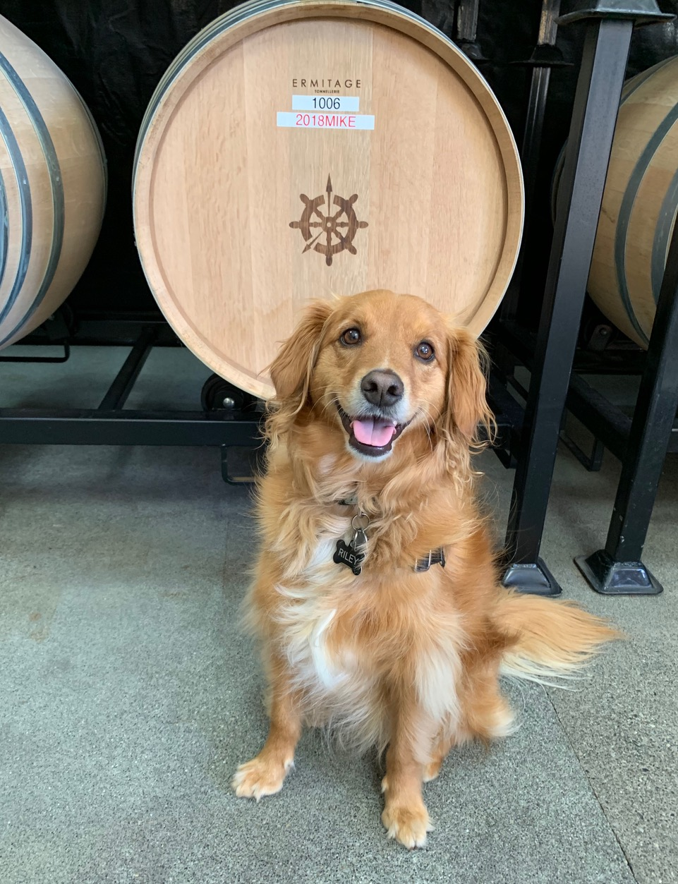 Riley - 2018 Winery Dog