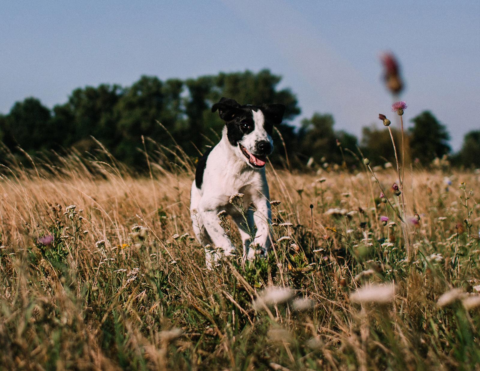 kutyas-fotozas-szeged-2017-9.jpg