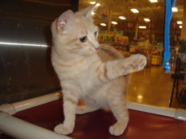 Culpeper Felines & Friends.jpg
