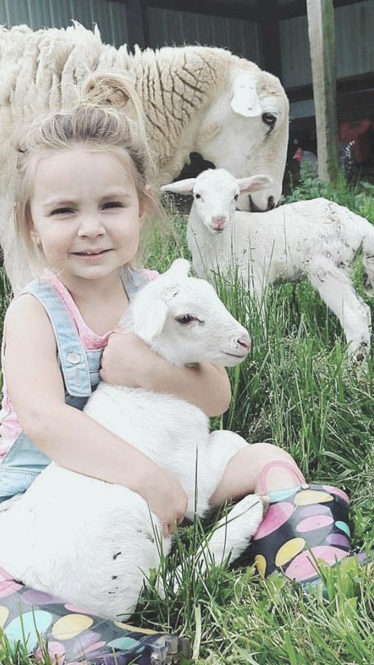 Willow_Sheep.jpg
