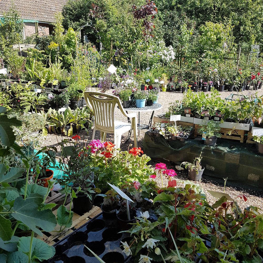 Hillfield-Plant-Nursery-Thorpe-next-Haddiscoe.jpg