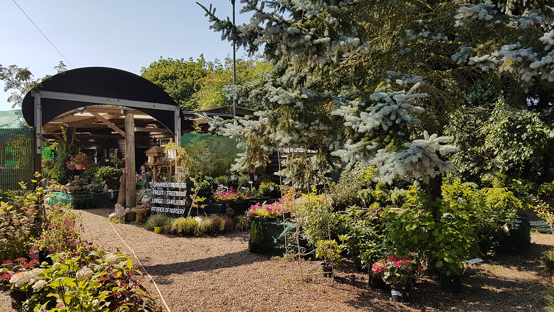 Hillfield-Nursery-Norfolk.jpg