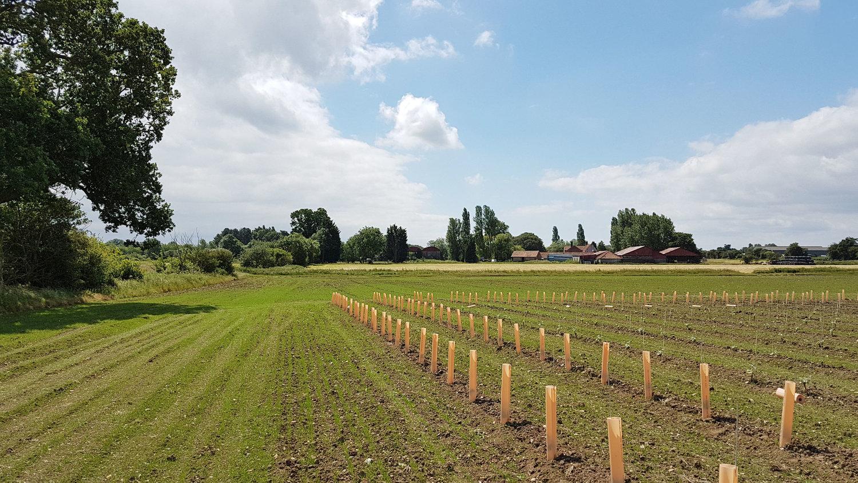 Old-Hall-Farm-Dairy-Woodton.jpg