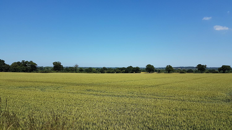 Yare+Valley+Oils+Surlingham+Norfolk.jpg