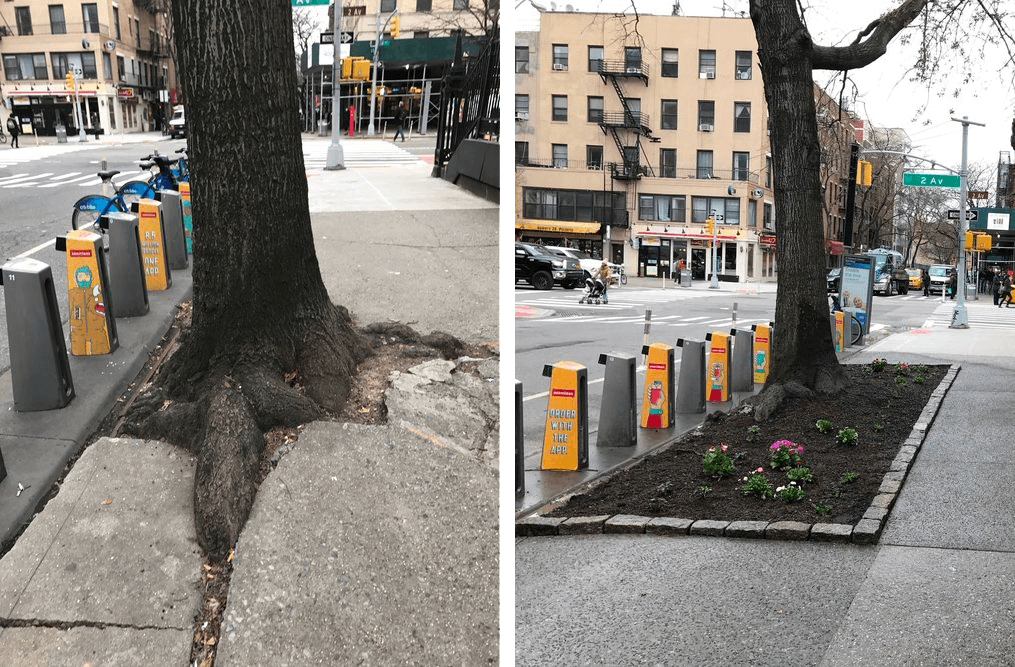 A growing city tree results in a broken sidewalk … but a gift from the diocese allowed us to fix it!