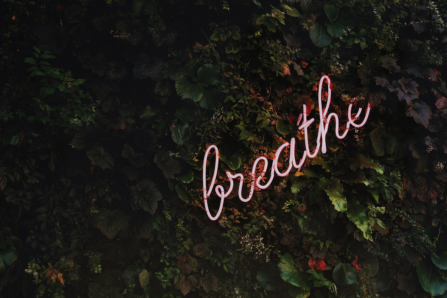 Breathe neon letters on bush for mindfulness and wellbeing in Gloucestershire