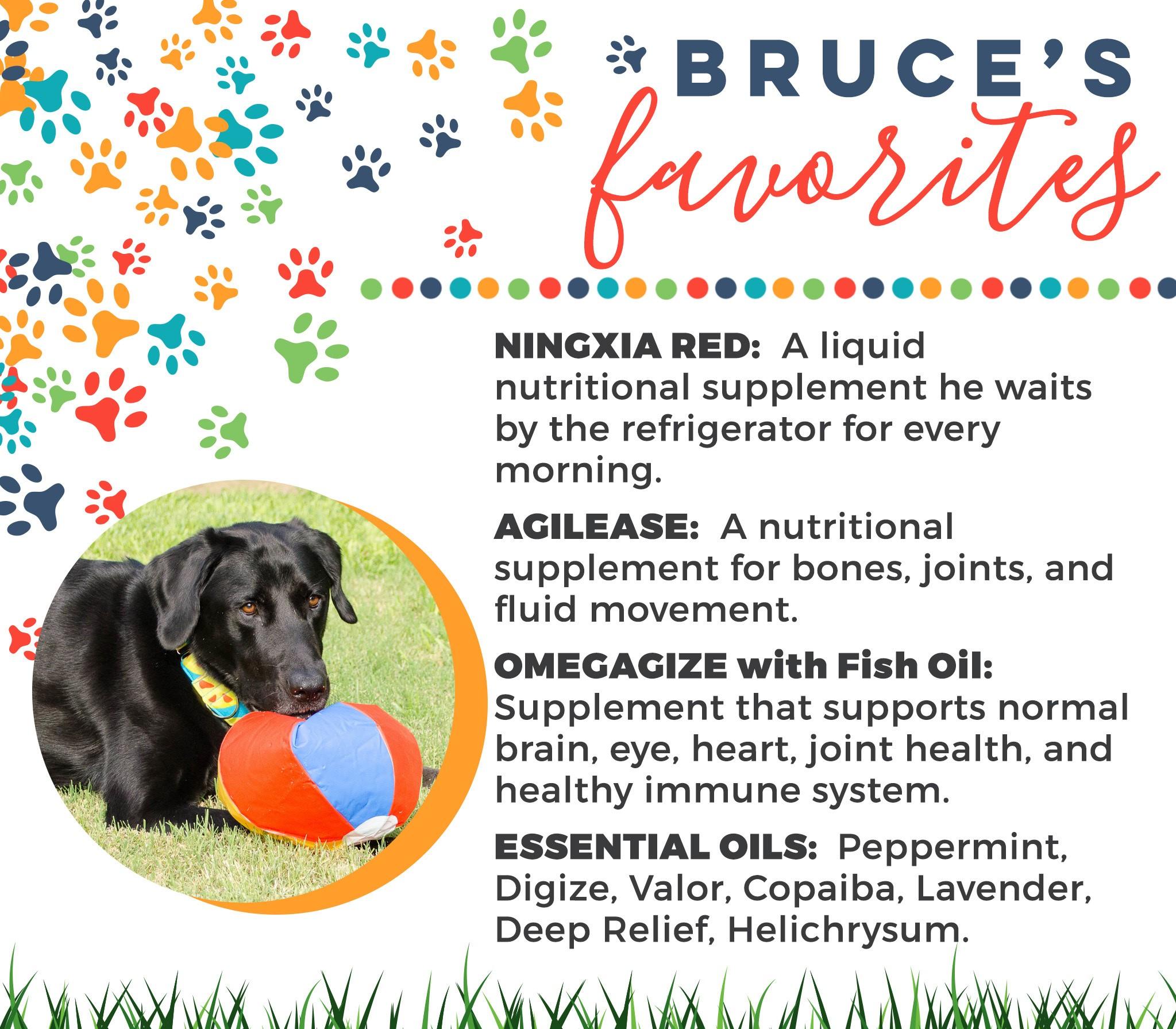 4-Dogs-Bruce-Faves.jpg