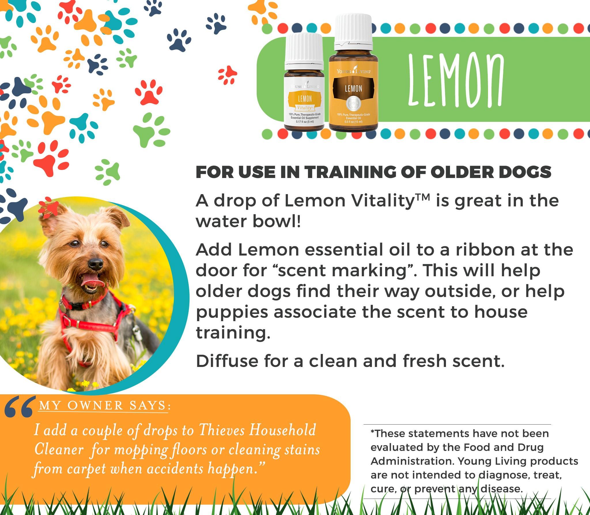 16-Dogs-Lemon.jpg